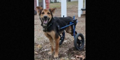 Mientras tanto, Peanman consiguió a un veterinario, que diagnosticó que la espalda de Leo estaba rota y no tenía sensibilidad en las piernas. Foto:Facebook.com/HelpSaveLeo