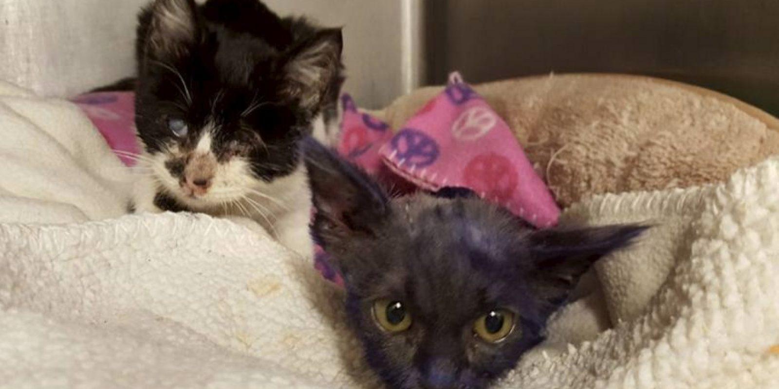 Durante su rehabilitación Wanda es la nueva amiga de Pitufo. Foto:facebook.com/NineLivesFoundation