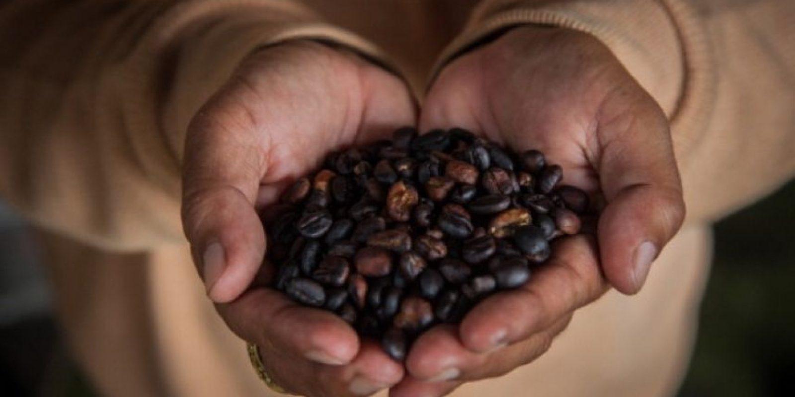 La investigación realizada a 270 mujeres suecas encontró que la mitad de ellas llevaban el gen responsable de la contracción de los senos en las bebedoras de café. Foto:Getty Images