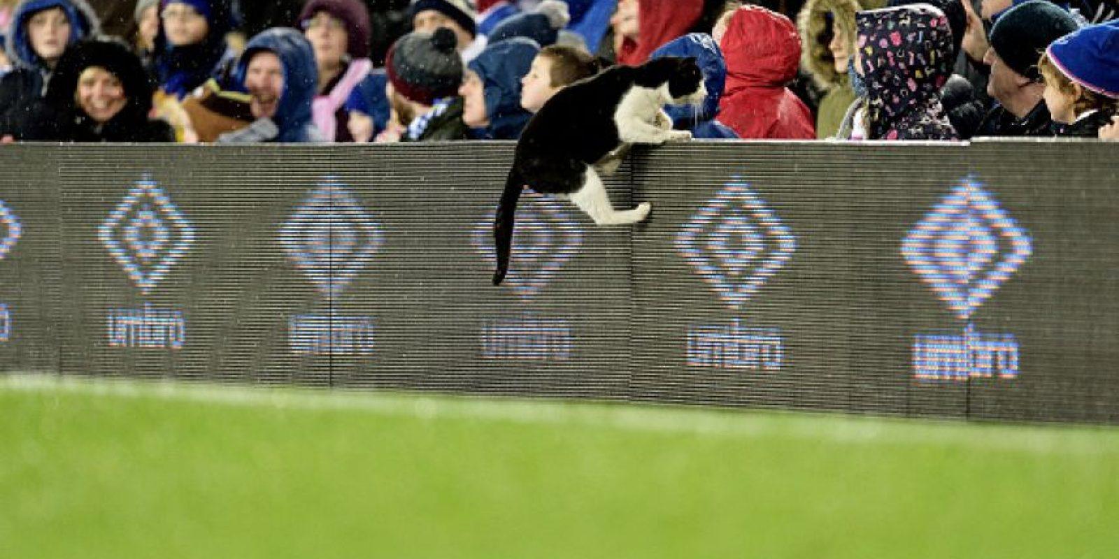 Pero este continuó cuando el animal abandonó la cancha. Foto:Getty Images