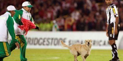 En 2011, este perro interrumpió un partido entre el Botafogo y el Independiente de Santa Fe de la Copa Sudamericana. Foto:AP