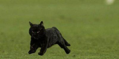 """En 2012 también un gato negro """"invadió"""" el Camp Nou, en aquella ocasión fue durante un Barcelona vs. Real Sociedad. Foto:Vía twitter.com"""