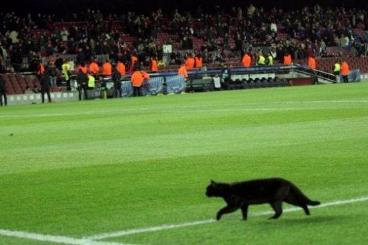Aunque algunos decían que la presencia del felino traería mala suerte para el equipo… Foto:Vía twitter.com