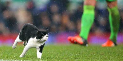 Este travieso gato invadió Goodison Park el pasado 9 de enero. Foto:Getty Images