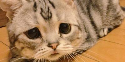 Pero la realidad es que es un gatito feliz. Foto:Vía twitter.com/lanlan731