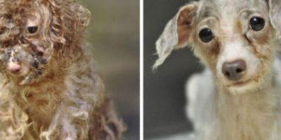 Antes/Después Foto:vía Reddit