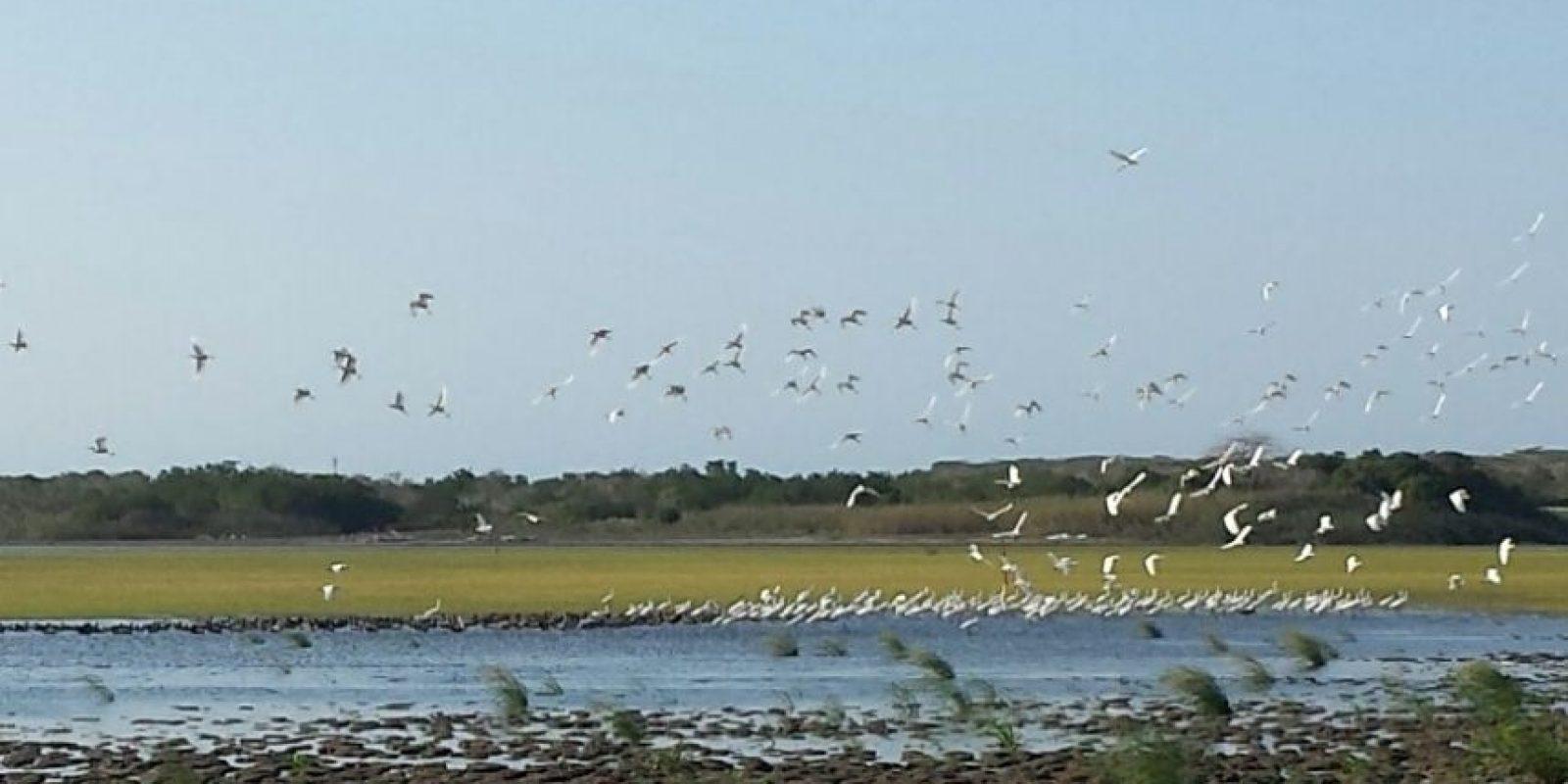 14 tipos de aves distintas, generalmente, podían ser avistadas antes de que el lago se secara. Hoy, los habitantes de la zona ven como un milagro su regreso. Foto:Lina Robles