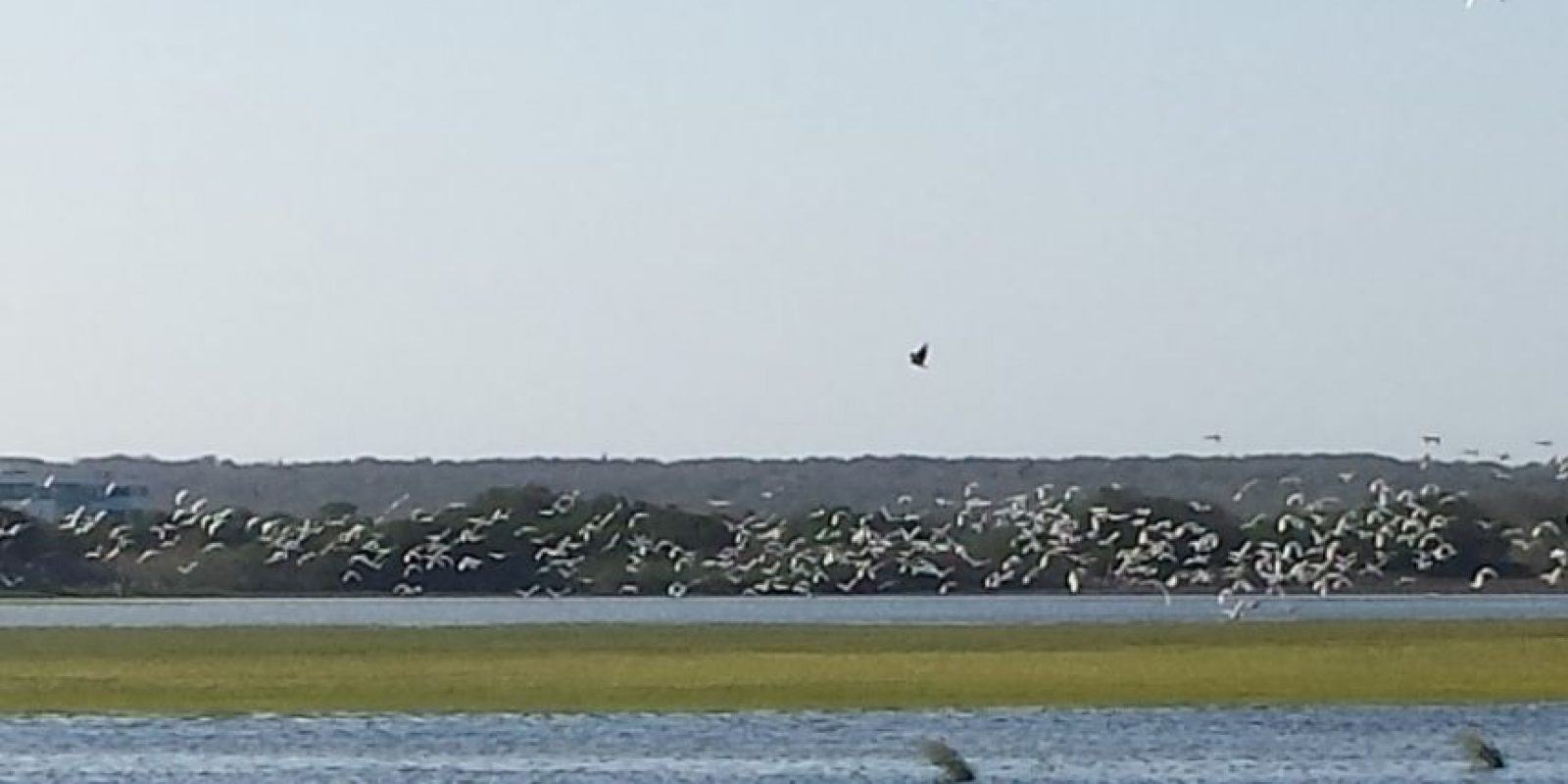 Algunas de estas aves provienen el norte del continente americano donde migran hasta las zonas cálidas en invierno durante el mes de agosto y septiembre. Foto:Lina Robles