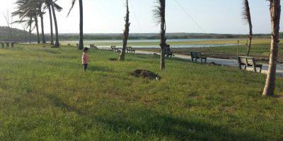 Vista del parque lineal del lago El Cisne. Foto:Lina Robles