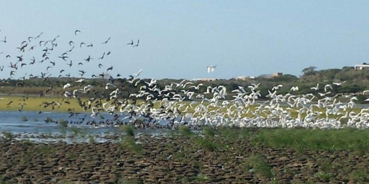 Fotogalería: Las aves migratorias regresaron al Lago El Cisne en Barranquilla