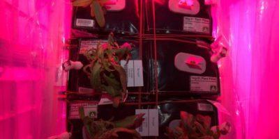 Con el que se busca producir alimentos para misiones tripuladas de larga duración hacia Marte. Foto:Vía nasa.gov