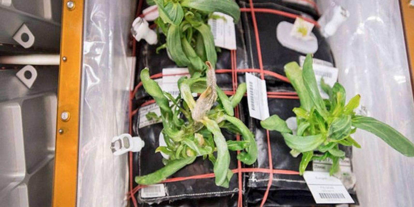 Y crear jardineros autónomos. Foto:Vía nasa.gov