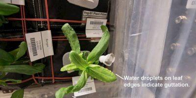 Las plantas crecen en condiciones de microgravedad. Foto:Vía nasa.gov