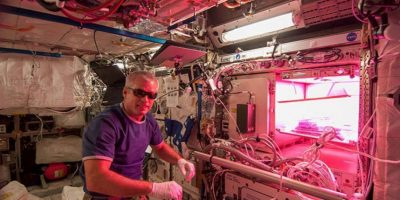 """Bajo el cuidado del proyecto espacial """"Veggie"""". Foto:Vía nasa.gov"""