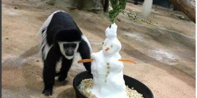 Algunos animales tuvieron contacto con la nieve por primera vez Foto:Instagram.com/marylandzoo