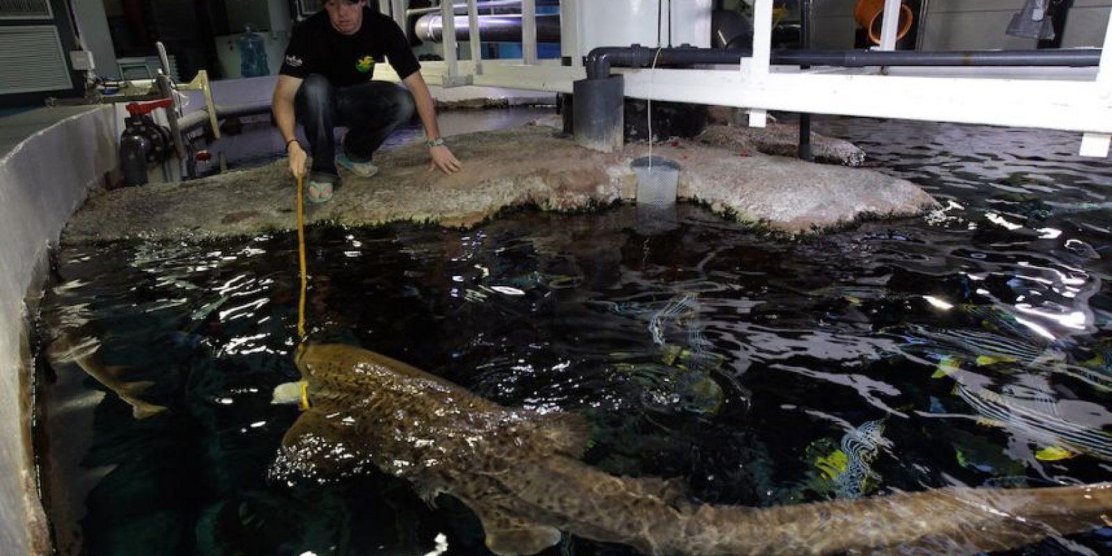 """El condado de Volusia en Florida, EEUU, es conocida como """"la capital de tiburones en el mundo"""". Foto:Getty Images"""