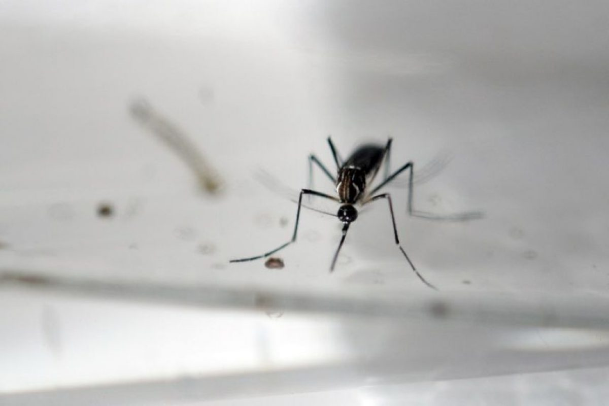 Zika se detectó por primera vez en Uganda, en 1947, pero nunca había causado un brote de esta magnitud. Foto:AFP