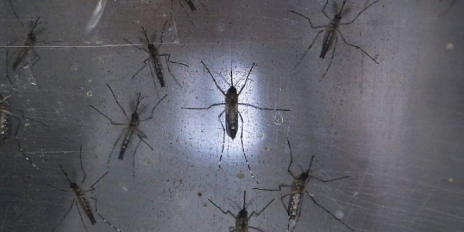 Los insectos pueden transmitir peligrosas enfermedades. Foto:Getty Images