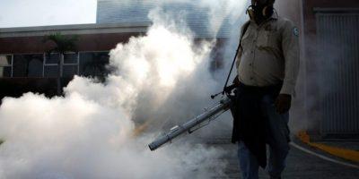 Este mosquito se encuentra principalmente en regiones tropicales. Foto:AFP