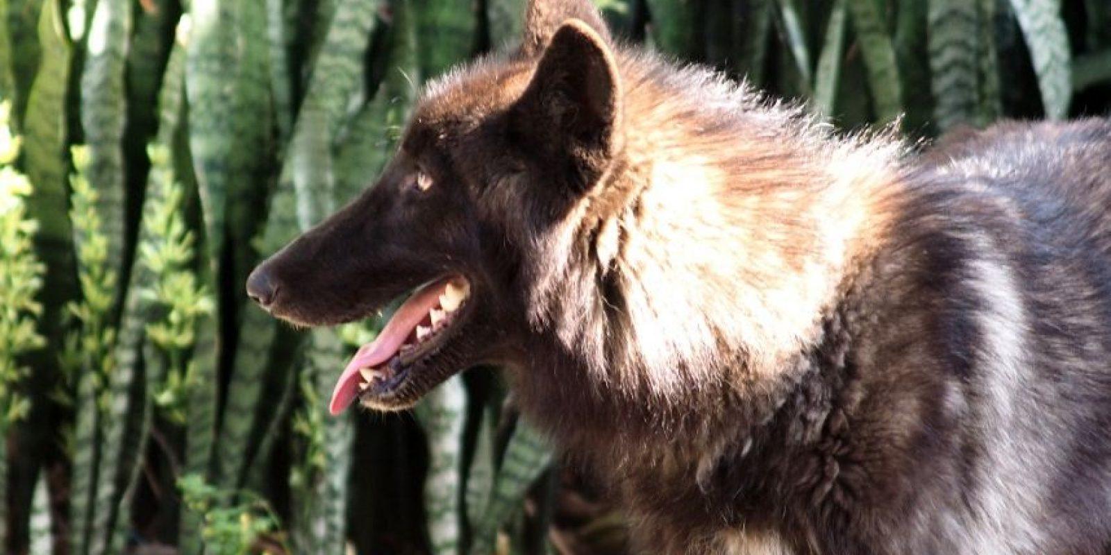 Foto:Cortesía Parque Zoológico Santa Fe Medellin