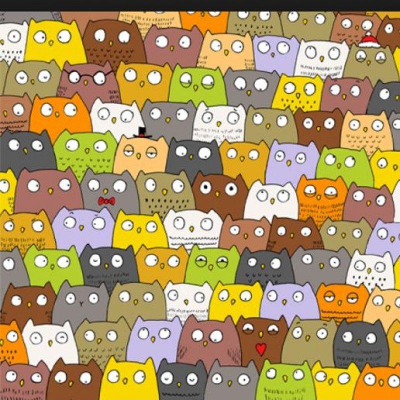 ¿Dónde está el gato? Foto:Vía Twitter