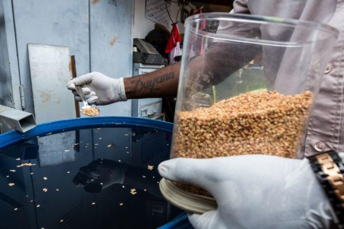 Aún no existen vacunas ni tratamientos para esta enfermedad. Foto:AFP