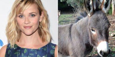 Reese Witherspoon tiene dos bullos, dos cerdos, gallinas, tres perros, cabras y un pony. Foto:Getty Images