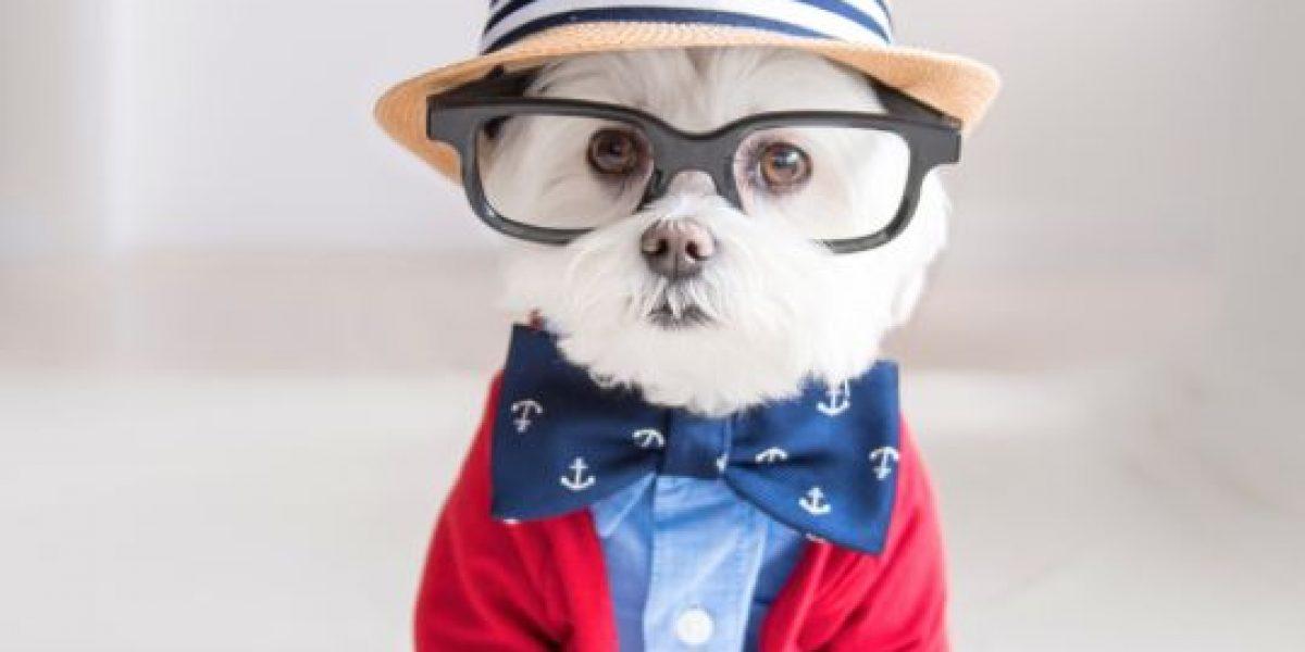 Conozca a Toby, el perro hipster