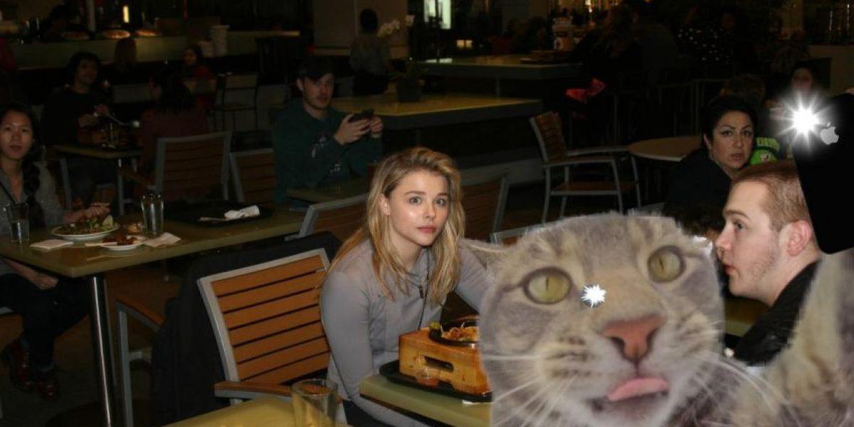 Un gato se tomó un selfie y ahora Internet se burla con ediciones de Photoshop