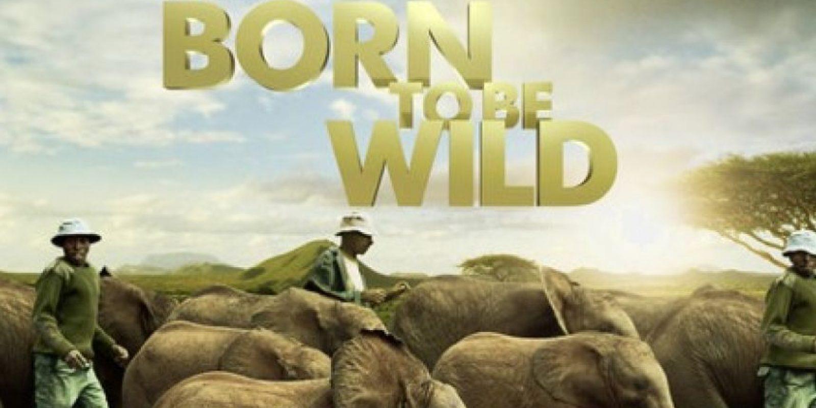 """""""Born to be Wild: IMAX (3D)"""" – Disponible a partir del 27 de marzo."""