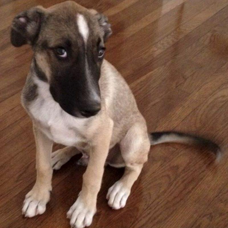 Algunas de sus mascotas fueron rescatadas de la calle Foto:vía instagram.com/salmahayek