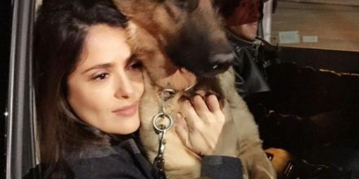 El perro de Salma Hayek fue asesinado por uno de sus vecinos