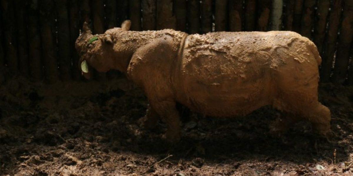 En un día declaran posible extinción de 2 especies de animales