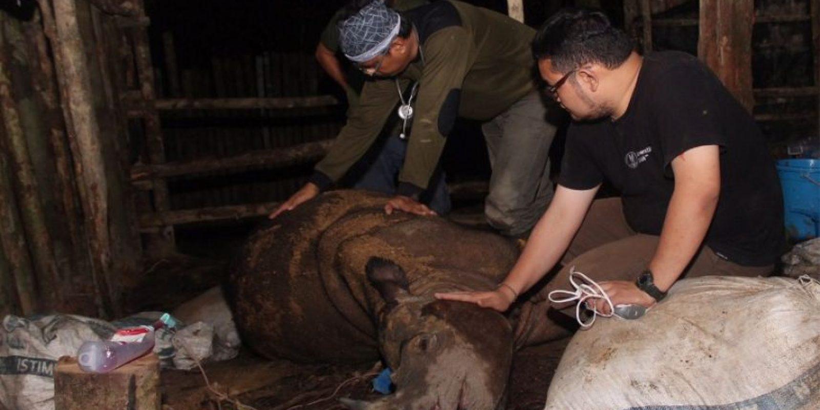 Aunque se intentó, no se le pudo salvar y murió ayer Foto:AFP