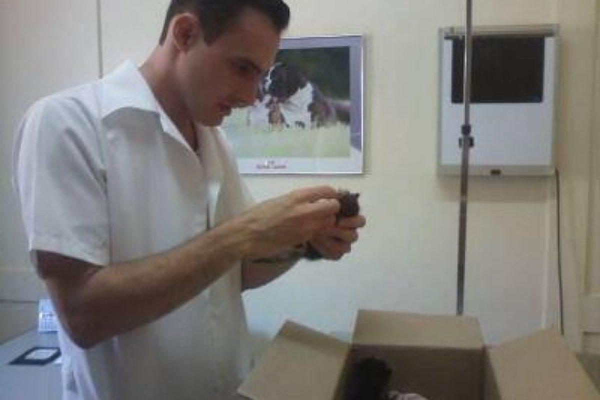 Fueron examinados por un veterinario y se encuentran con buen estado de salud Foto:Facebook.com