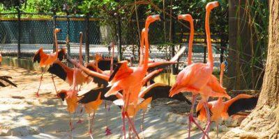 Foto:Zoológico de Barranquilla