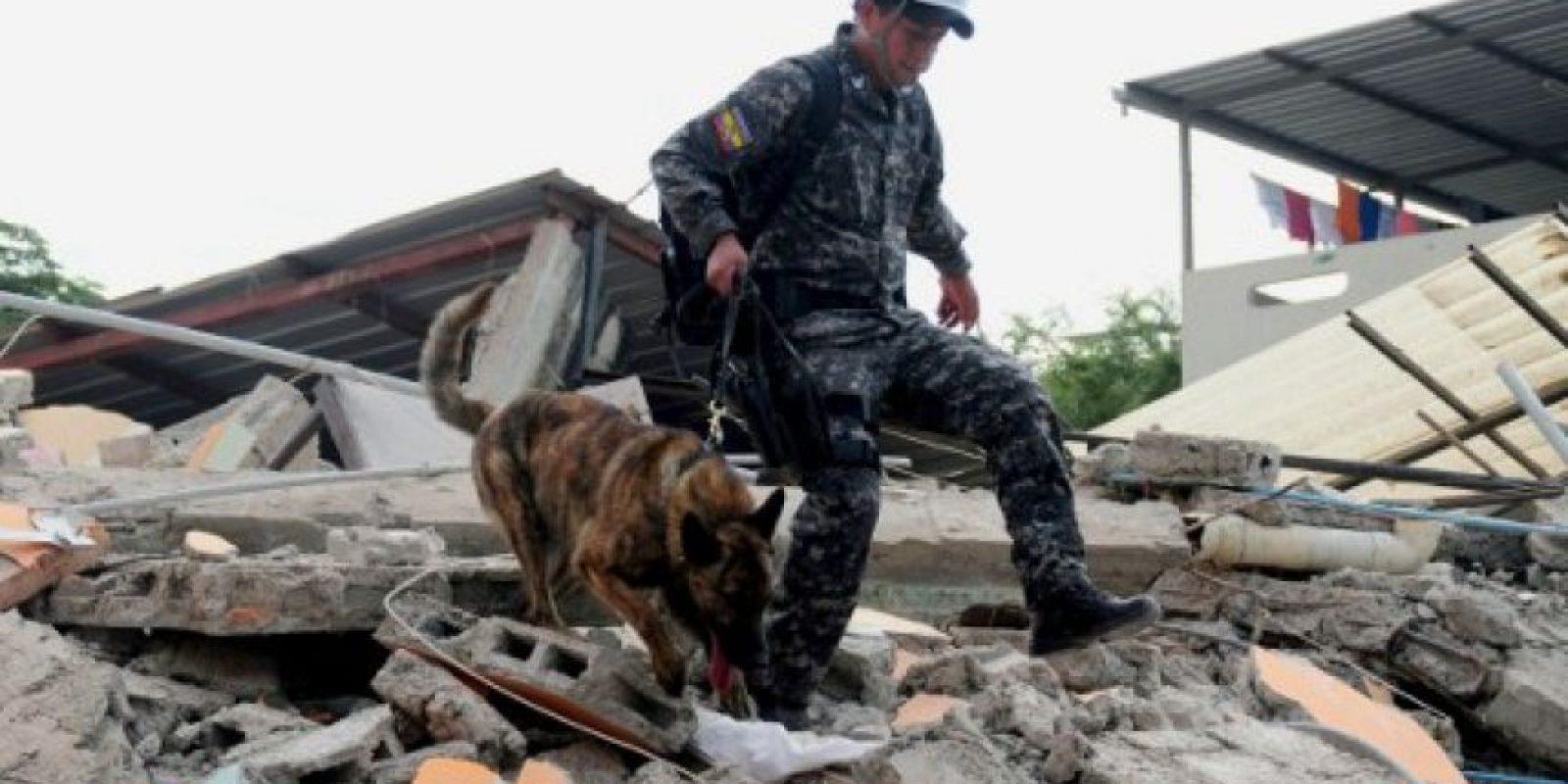 Equipos de rescate buscan vidas bajo los restos. Foto:AFP