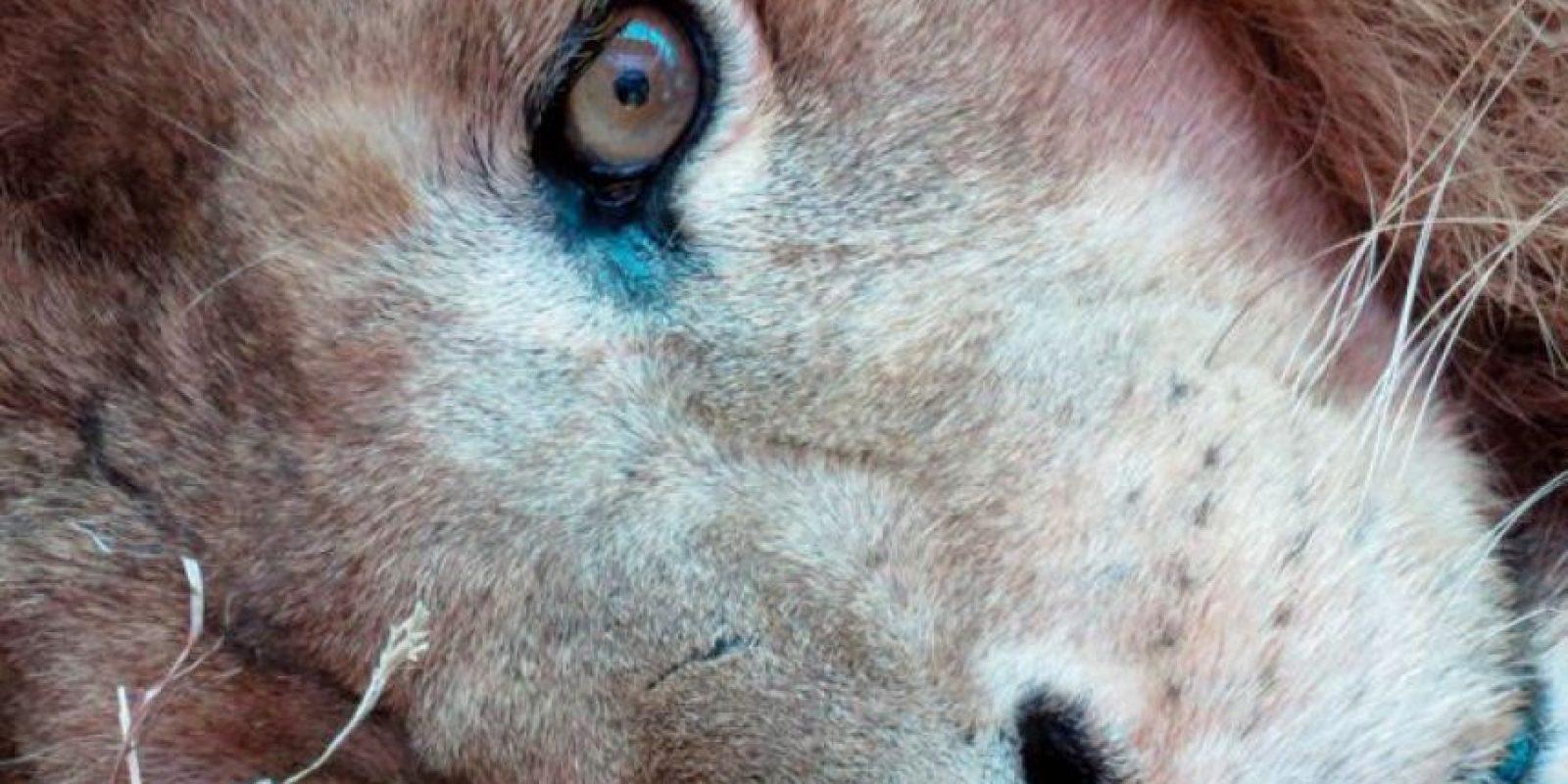 Bumba Foto:Cortesía ADI (Animal Defenders International)
