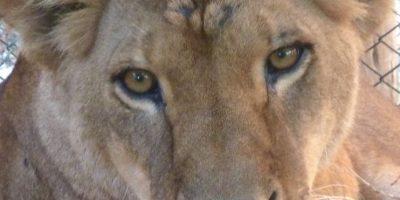 Easy Foto:Cortesía ADI (Animal Defenders International)