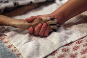 3. ¿Pueden permitirse económicamente una adopción? Foto:Getty Images