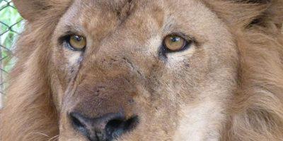 Iron Foto:Cortesía ADI (Animal Defenders International)