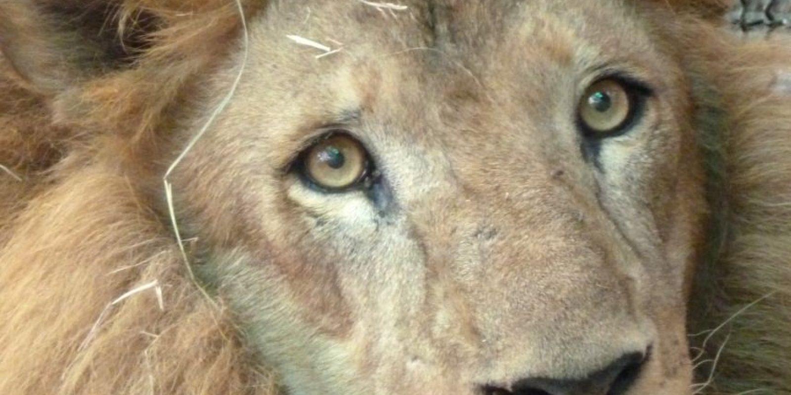 Junior Foto:Cortesía ADI (Animal Defenders International)