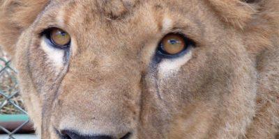 Shakira Foto:Cortesía ADI (Animal Defenders International)