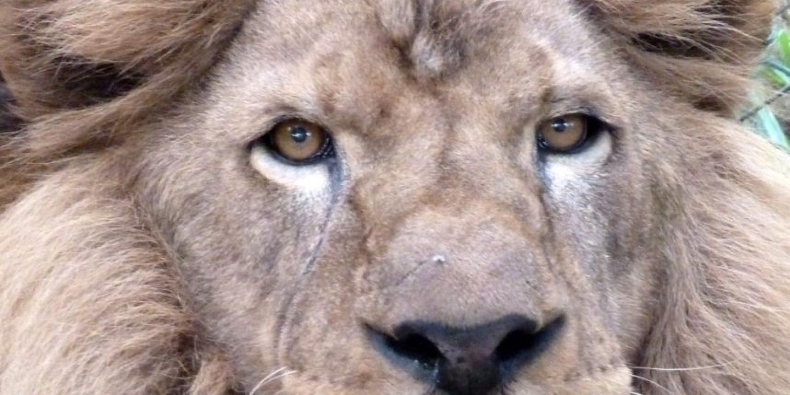 Zeus Foto:Cortesía ADI (Animal Defenders International)