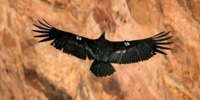 Está ubicado en en el norte de Arizona, Estados Unidos. Foto:Getty Images