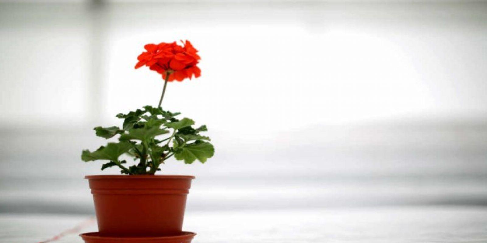 La fotosíntesis es el proceso por el cual las plantas fabrican su propio alimento. Foto:Getty Images