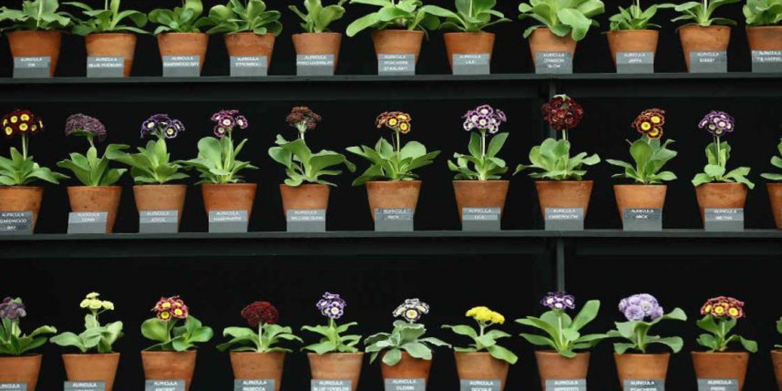 Para llevar a cabo este proceso, las plantas necesitan clorofila, que es la misma sustancia que las vuelve verdes. Foto:Getty Images