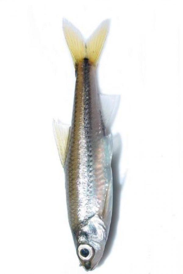 Con un pescado. Foto:vía Twitter