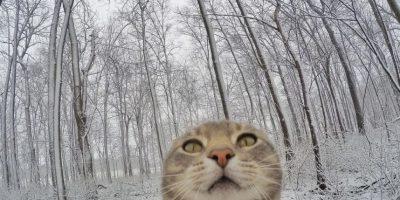 Sin embargo, se ha vuelto víctima de las ediciones con Photoshop, que lo han vuelto meme. Foto:instagram.com/yoremahm