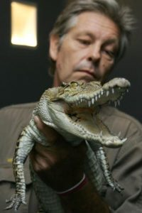Datos que deben conocer de los cocodrilos Foto:Getty Images